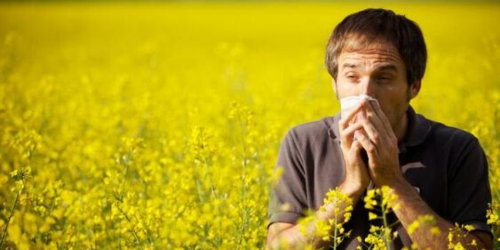 Why Does Pollen Cause Allergies? Feature Image