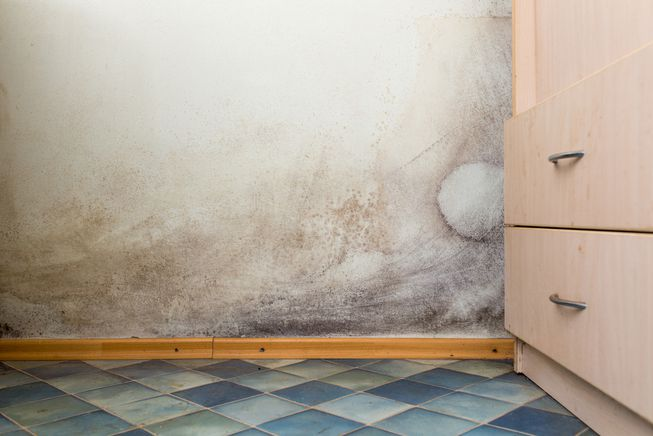 Tips To Prevent Mold Growth Feature Image