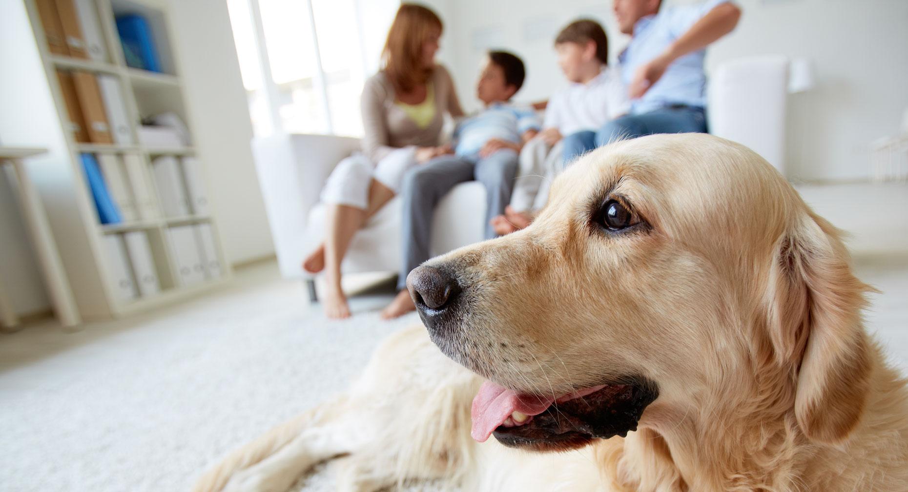 Pet Allergies Rise As Temperatures Drop Feature Image