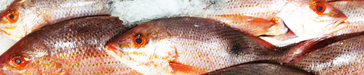 Fish Allergy Feature Image