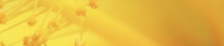Pollen Allergies Feature Image